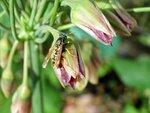 Залитые дождём пчёлки