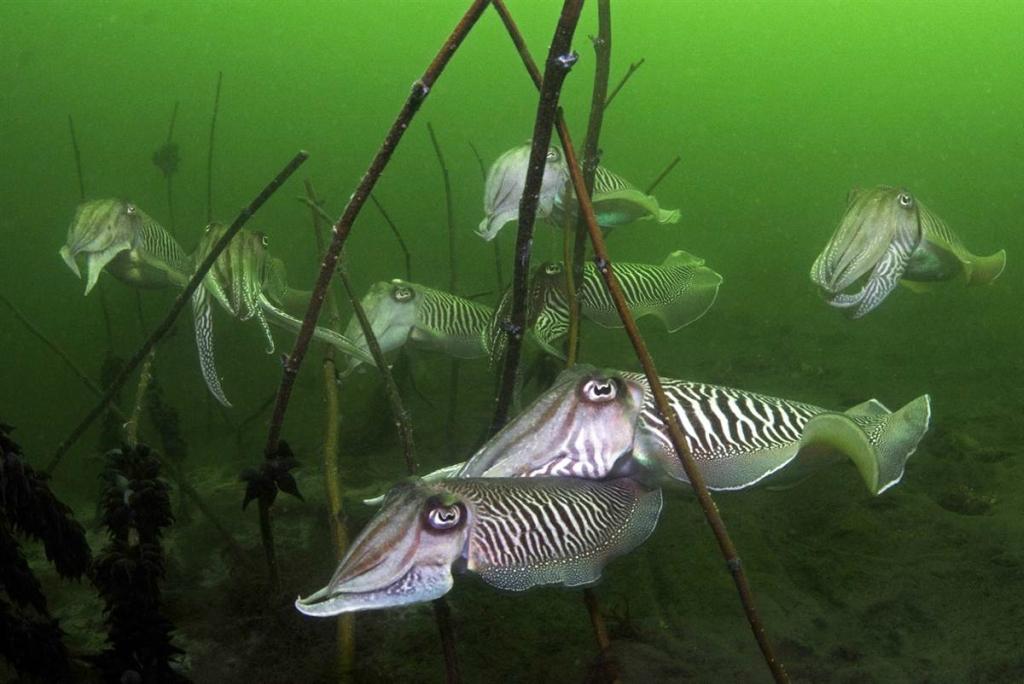 Лучшие подводные фотографии