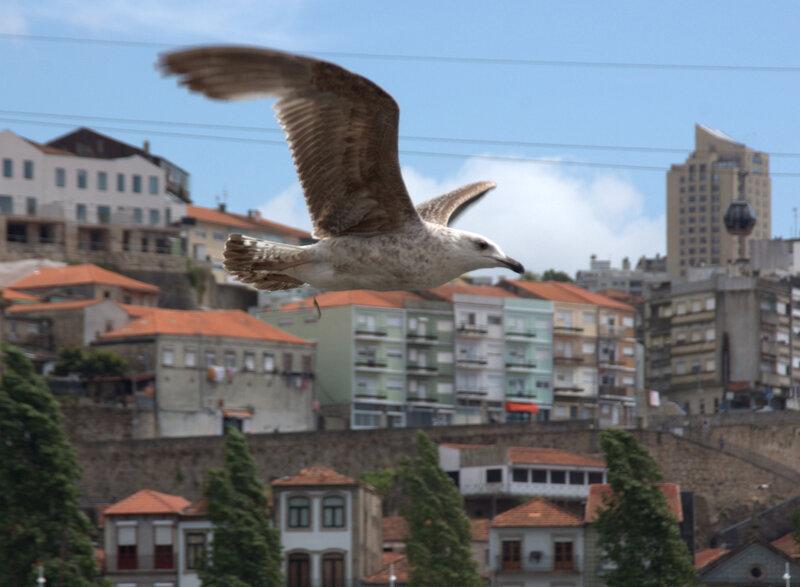 над Порто