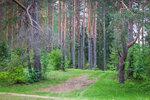 Лес у реки Молога