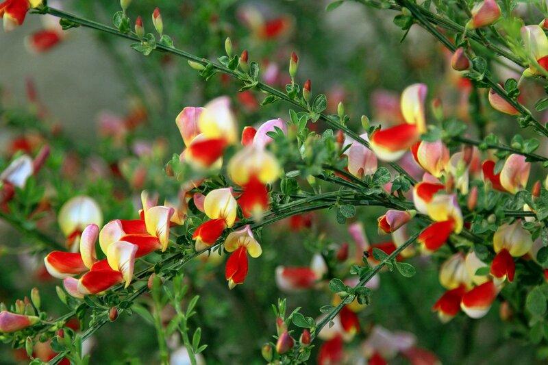 Весенние цветы Партенита