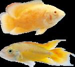 рыба (11).png
