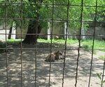 http://img-fotki.yandex.ru/get/9226/193491732.4/0_a46d6_df00001b_S.jpg