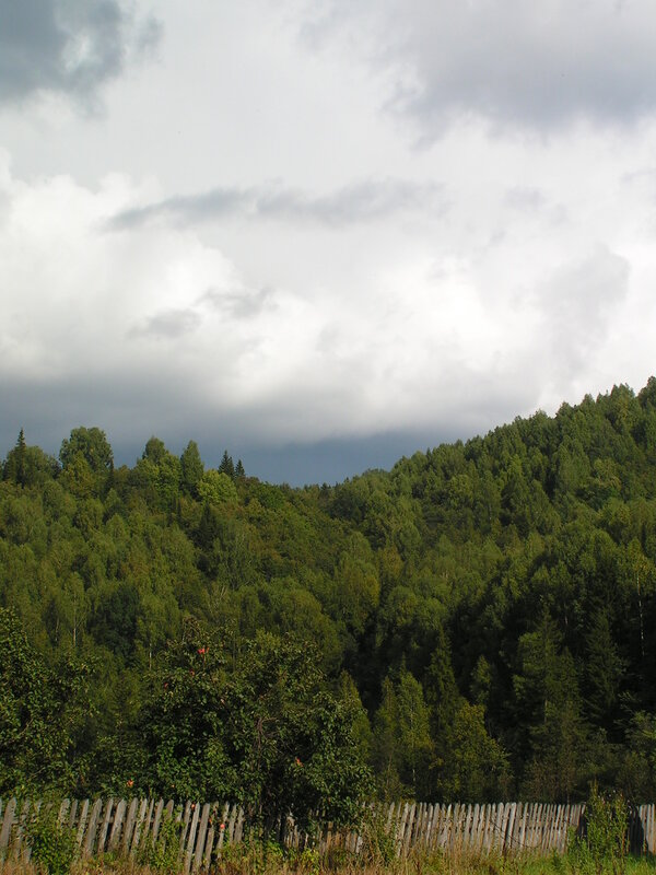 Зелень на фоне неба и облаков (04.07.2013)