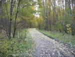 Дорога из Кишкино через лес в Кошелевку