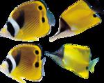 рыба (19).png