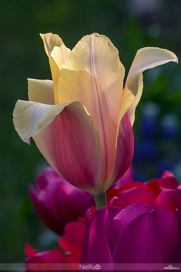 Я люблю все цвеb50ты, часть 41