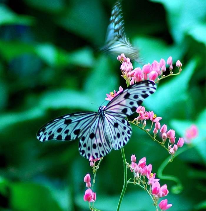 Картинки природа лето бабочки