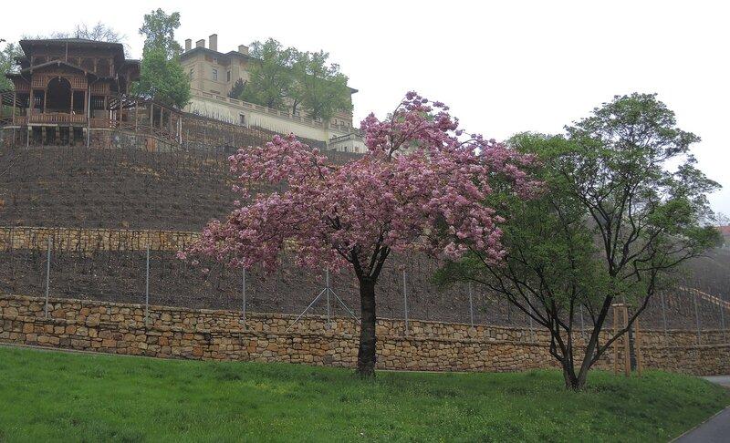Гавличковы сады - виноград для королей
