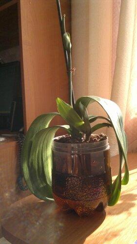 Реанимация орхидей. - Страница 3 0_c6c6e_6a410e19_L