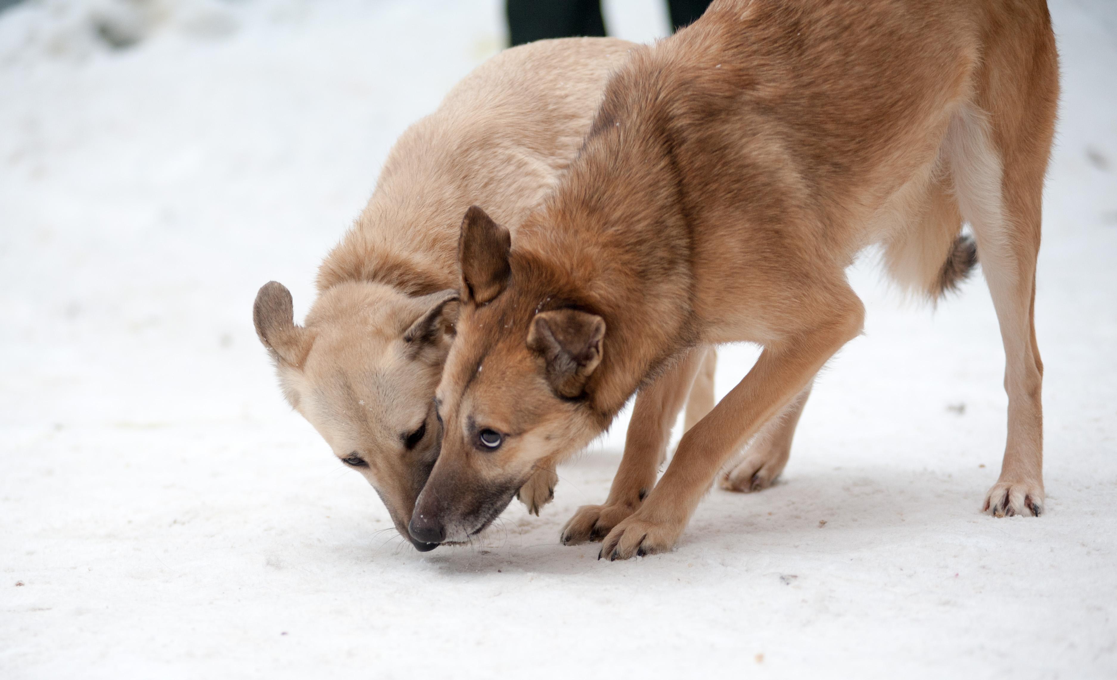 Анка собака из догпорта