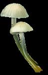 ldavi-paintersfaeries-mushroom1.png