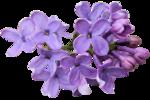 Lavender Paradise (73).png