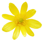 Spring Harmony (26).png