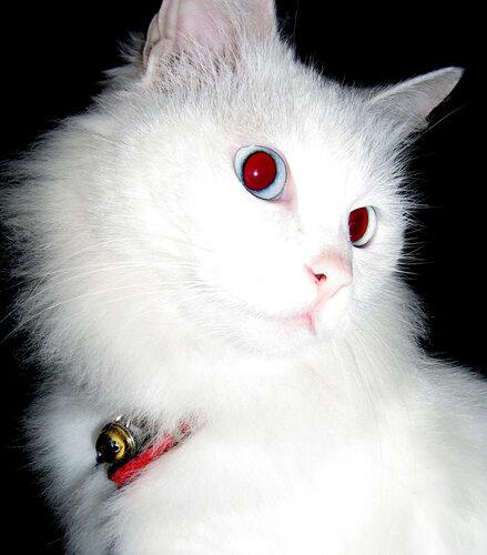 Почему у кошек глаза светятся в темноте ?