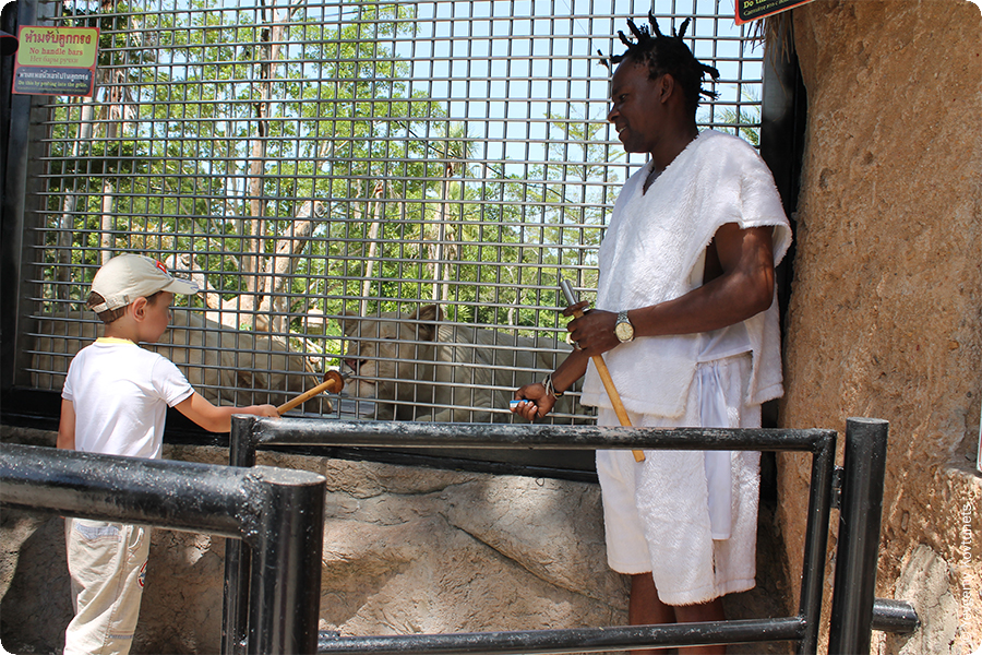 Аттракцион кормления львицы + негр. Khao-Kheo Open Zoo