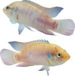 рыба (17).png
