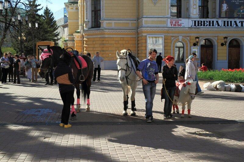 Улица Большая Покровская, лошадки