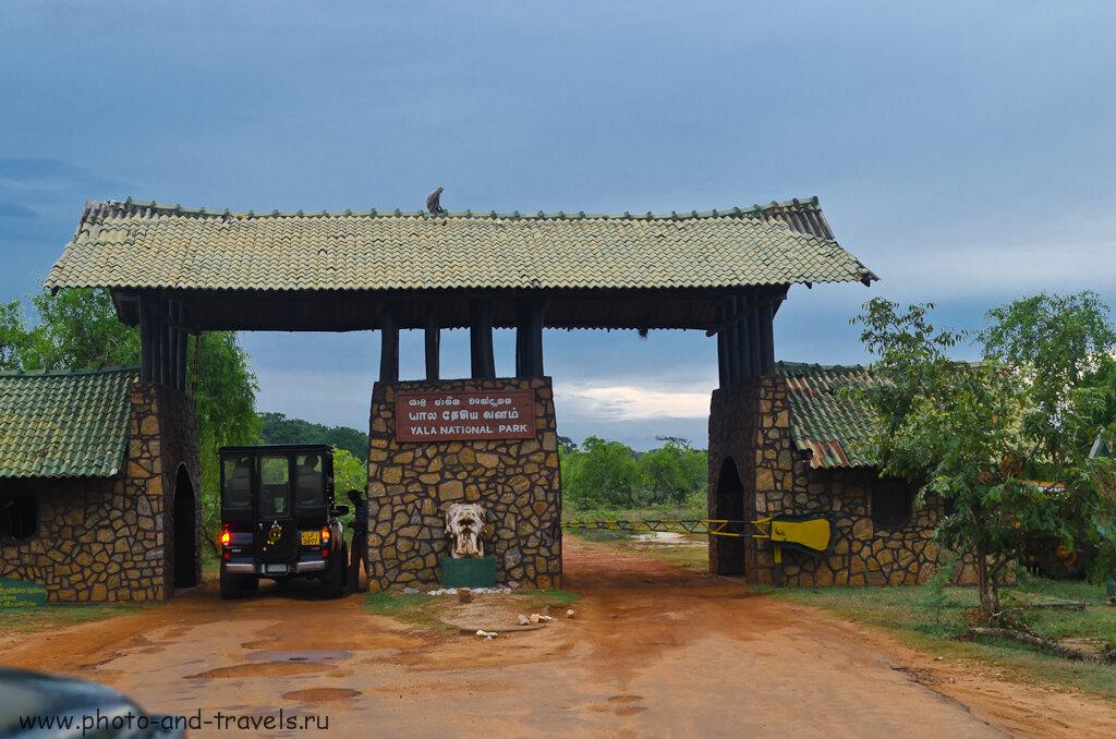 Составляем бюджет расходов на отдых в Шри-Ланке. Обязательно включите затраты на экскурсию в природный парк Яла (Yala National Park) - здесь проводятся очень интересные сафари.
