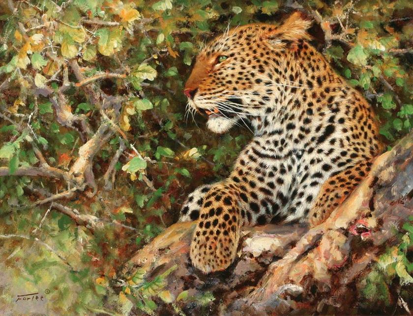 Животный мир Африки. Eric Forlee