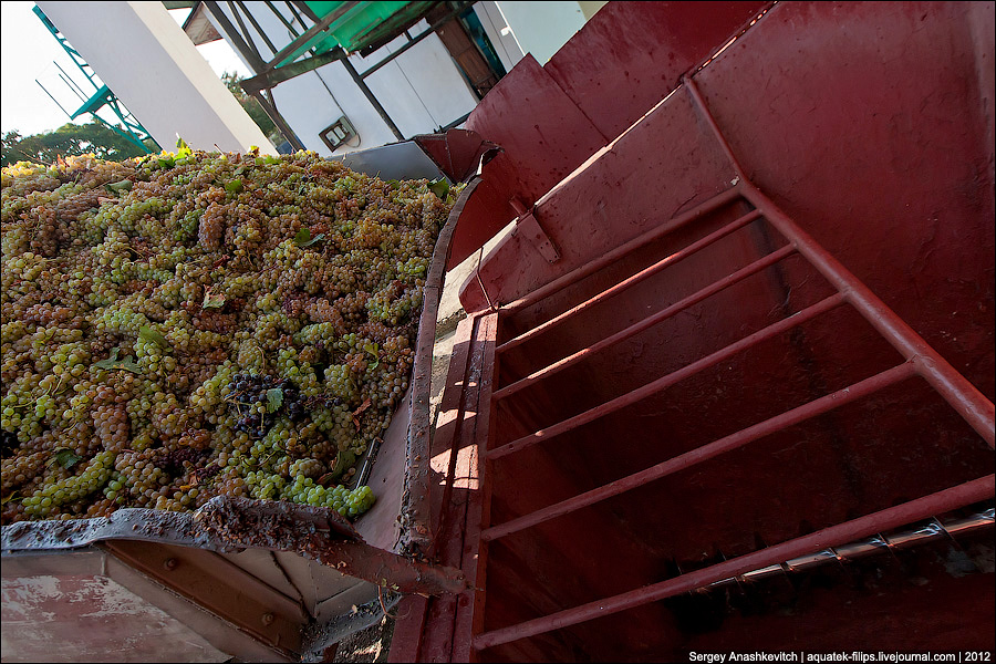 Переработка винограда