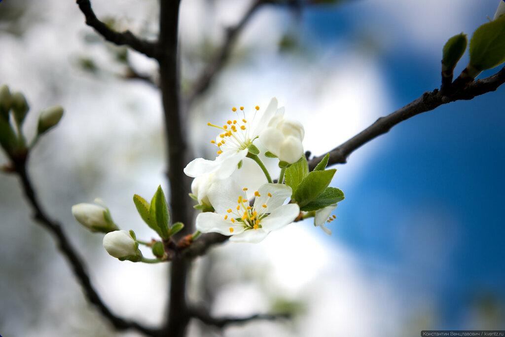 Весна была совсем недавно…