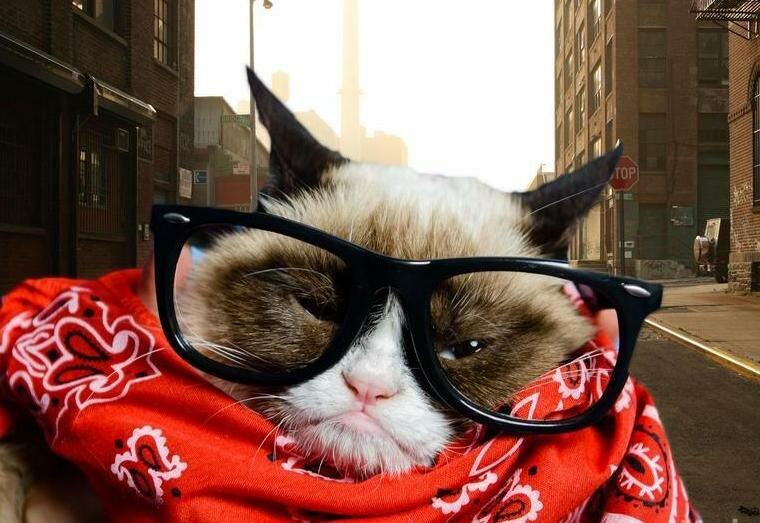 Grumpy Cat станет героем игрового фильма