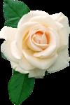 запах роз