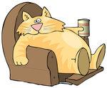 кот - мотивация -отдых- лень.jpg