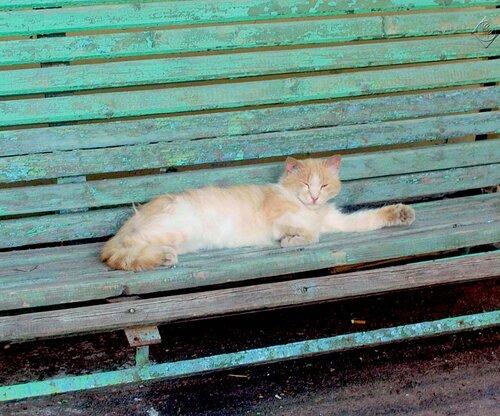 Дремлет кот усталый
