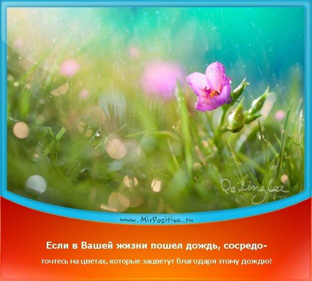 позитивчик дня - Если в Вашей жизни пошел дождь, сосредоточтесь на цветах, которые зацветут благодаря этому дождю!