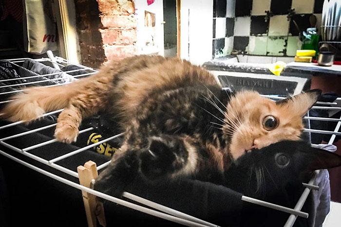 По словам хозяйки, животное в 2009 году было найдено котенком на молочной ферме.