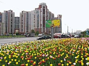 Тюльпаны на Ленинском проспекте.