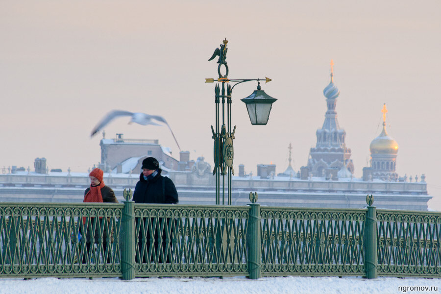 * * * * (зима, пара, Петербург, птица, Спас-на-крови, чайка)