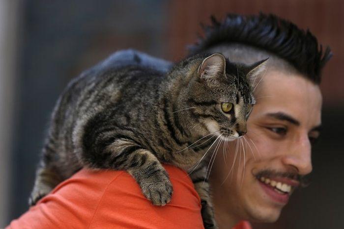 Кот на плече фото 1