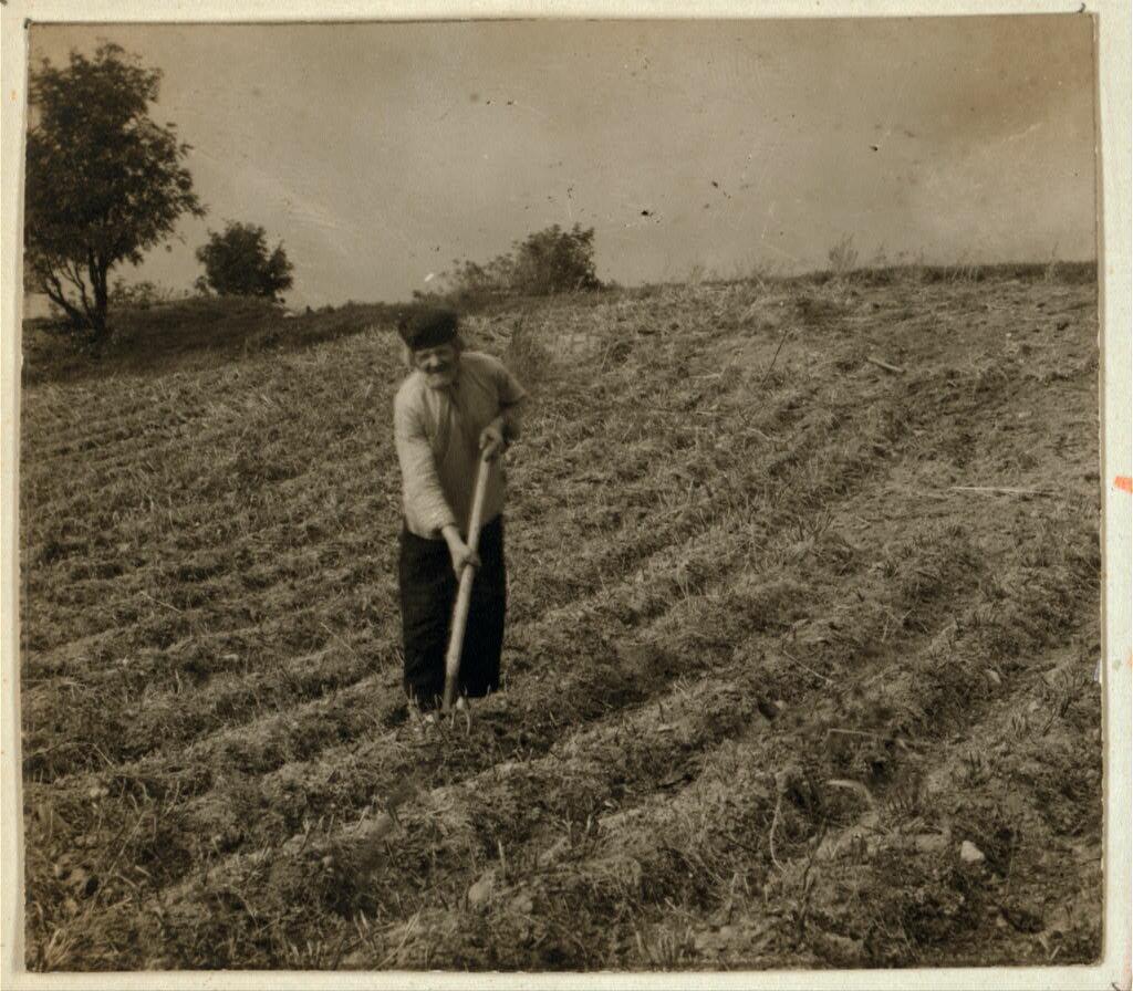 Финн, копающий картофель. 1902 - 1904.