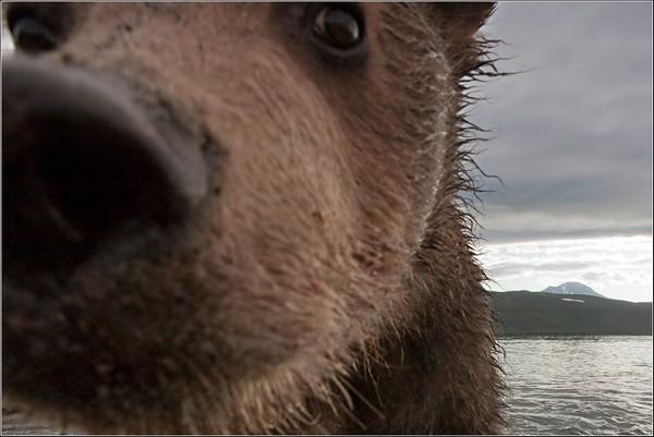 Фотографии животных отлучших фотографов анималистов России 0 145e42 236c6e0a orig