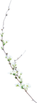 Beautiful-Blossom_birdhouse1 (4).png