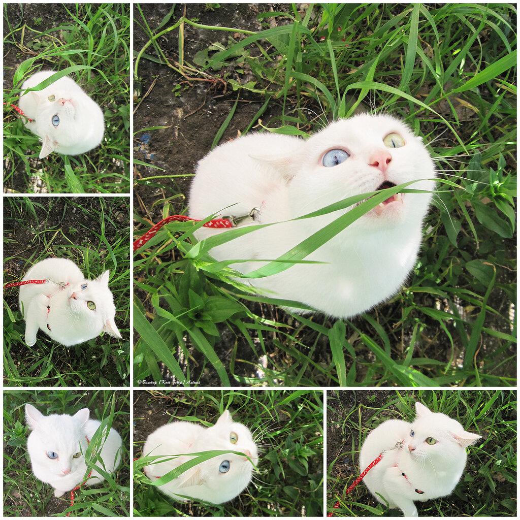 h схему вышивки кошачий вальс ртом
