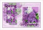 Урок «Spring flower/Весенний Цветок»