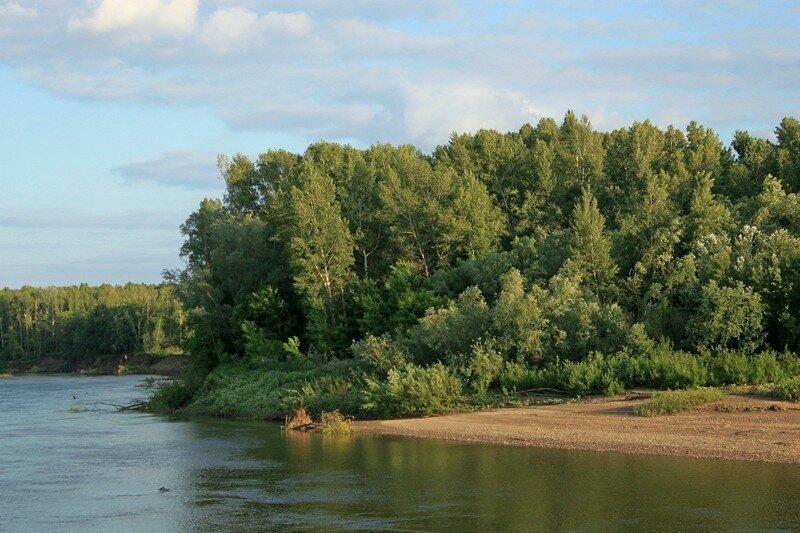 Лес на берегу Сакмары