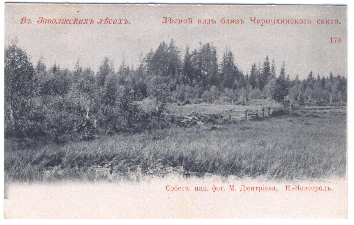 Лесной вид близ Чернухинского скита