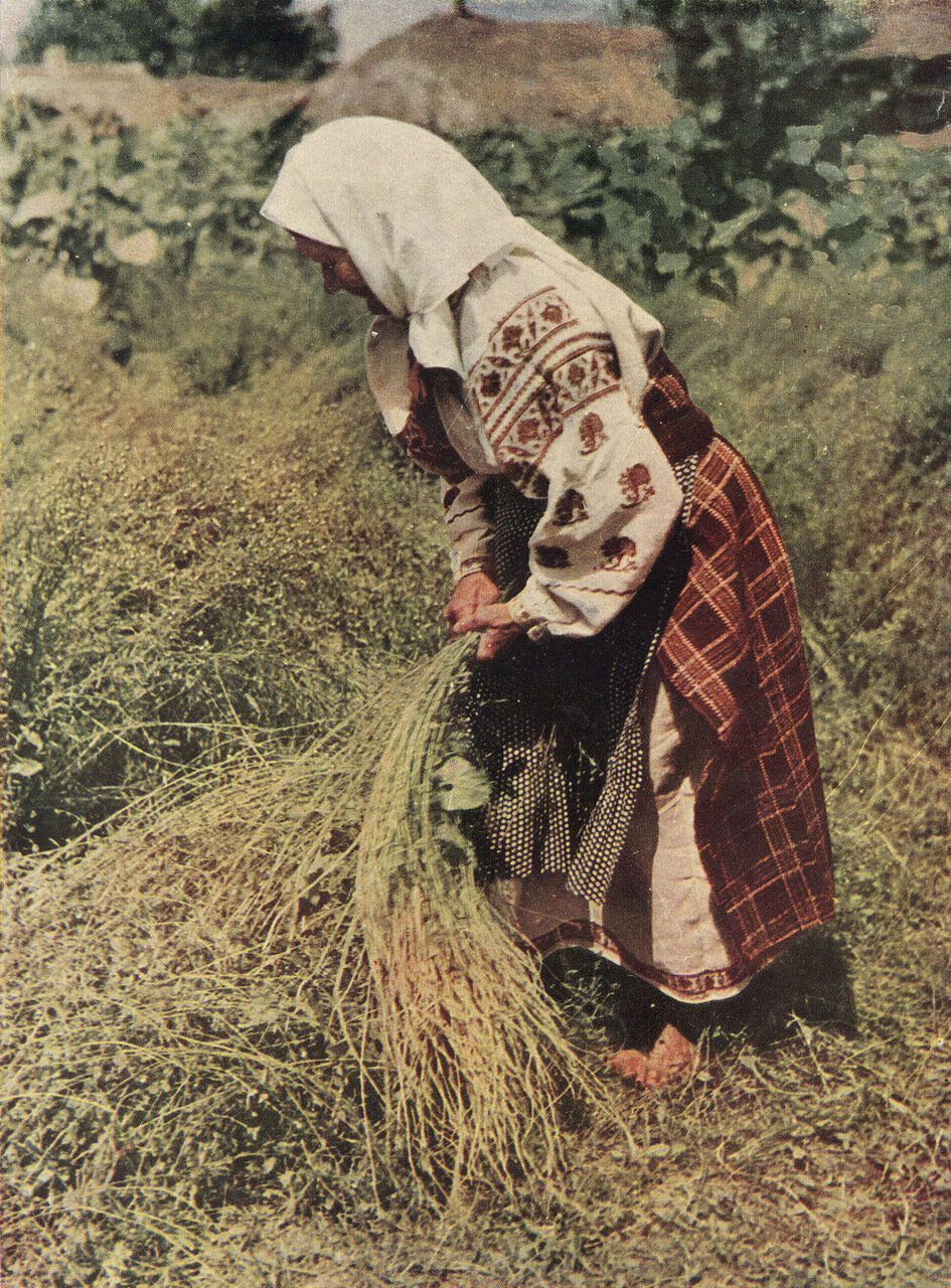Пожилая женщина в вышитой сорочке и плахте. Село Перелюб Холминского р-на Черниговской обл.