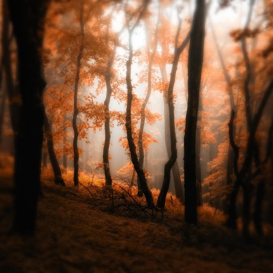 Wood by Janek Sedlar