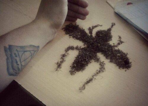 Комар из комаров (1 фото)