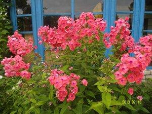 Флокс - какой же деревенский цветник без флоксов?:)