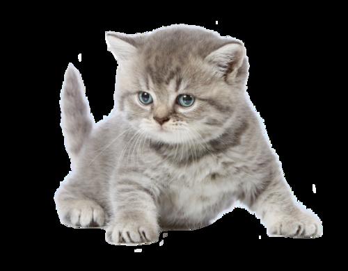 Клипарт кошки