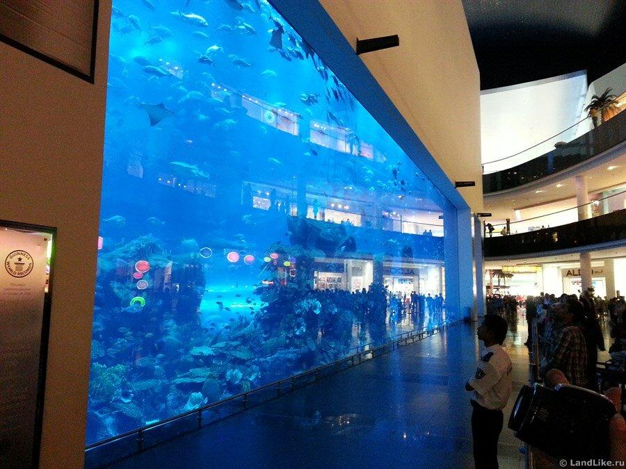 Океанариум Дубай Молл