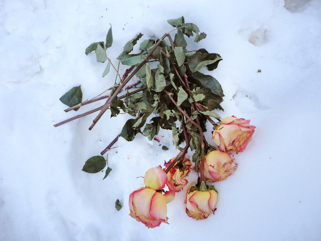 Разбитый цветок фото