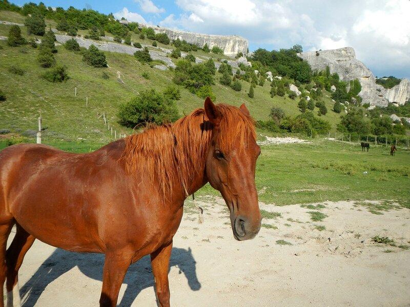 Лошади, кони и жеребята в пещерном городе Эски-Кермен, Крым DSCN3382.JPG